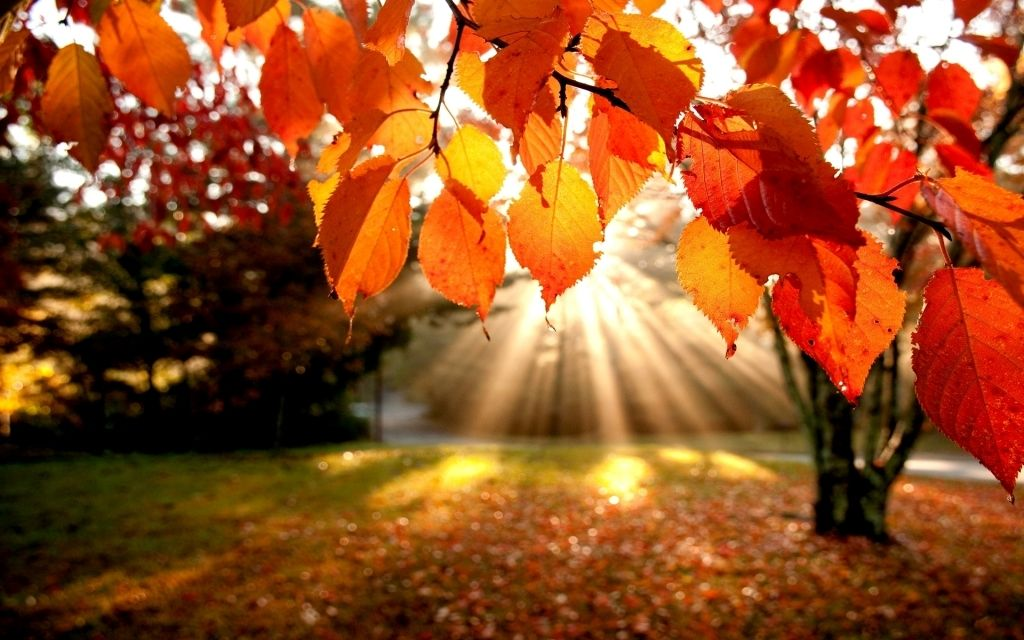 Fall  Fire & Life Safety Tips